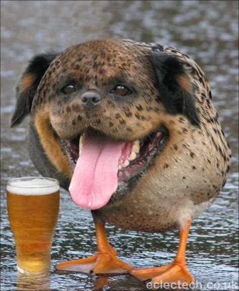 duck puppy fancy a pint at the n duck