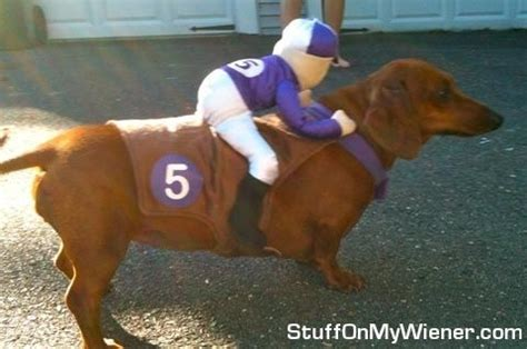 costume for dachshund 25 best ideas about dachshund costume on dachshund costumes