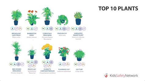best 10 air purifying plants with nasa ratings blog best air filtering plants according to nasa youtube