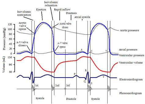 aortic stenosis wiggers diagram cardiac cycle