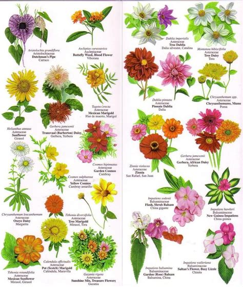 List Of Garden Flowers Flower Names Weneedfun
