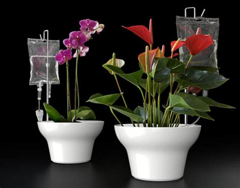 Plants In Water Vase by Innovative Flower Vases Vertical Home Garden