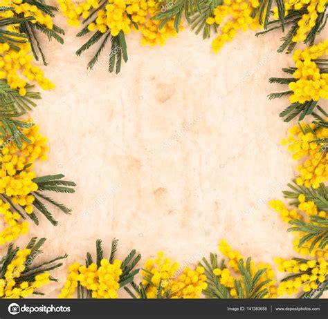 fiore mimosa immagini cornice di fiori di mimosa foto stock 169 vitaina 141383658