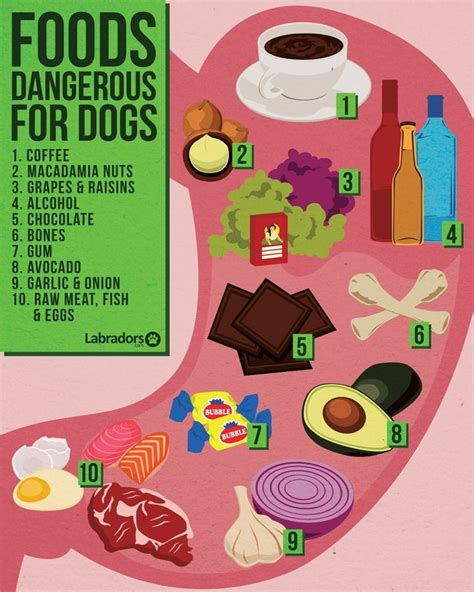 food for puppies best 25 dangerous foods for dogs ideas on