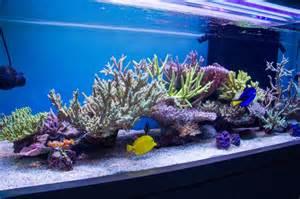 1000 images about marine on reef aquarium
