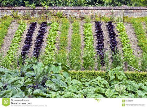vegetable garden on slope marigolds in vegetable garden best home decorating ideas