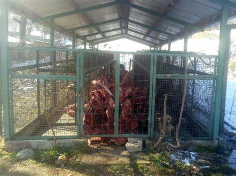 bitola zoo zombieland  stray dogs oipa international