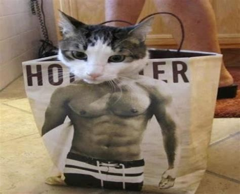 imagenes y videos chistosos que vibran gatos chistosos