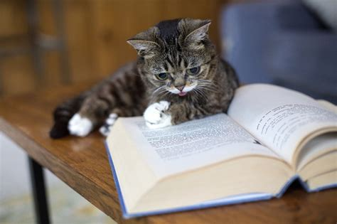 bub books lil bub reads books all creatures great and small