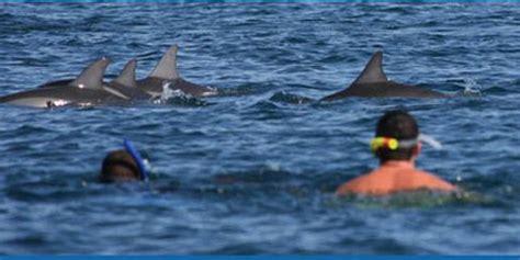catamaran cruise line reunion maurice dolphins chamarel safari bird park 1 day package