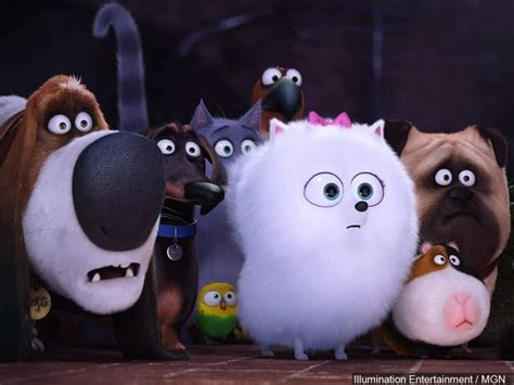 the secret life of pets box office buz the secret life of pets tops ghostbusters at box