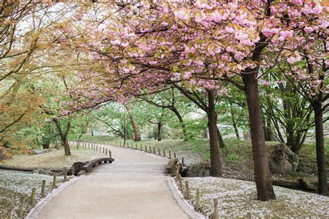 japanischer garten hasselt the japanese garden of hasselt capturing our days