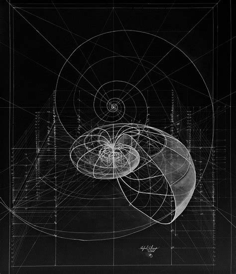heroic quest pattern life of pi 125 best images about golden ratio on pinterest the