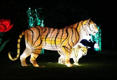 what time does zoo lights lights at dublin zoo