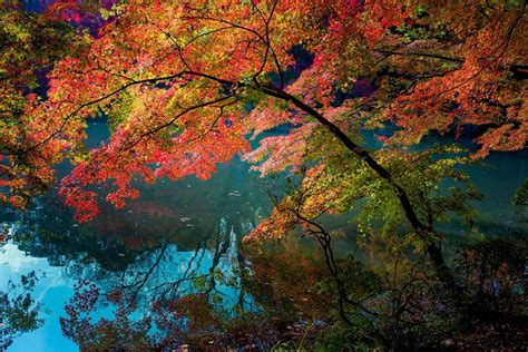 nature landscape water turquoise fall trees lake