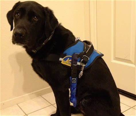 new technology for dogs how new technology will help service dogs speak with