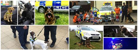 dog section police dog section norfolk constabulary