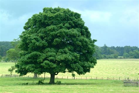a picture of tree spend less time with your lawyer with these tips tue tip