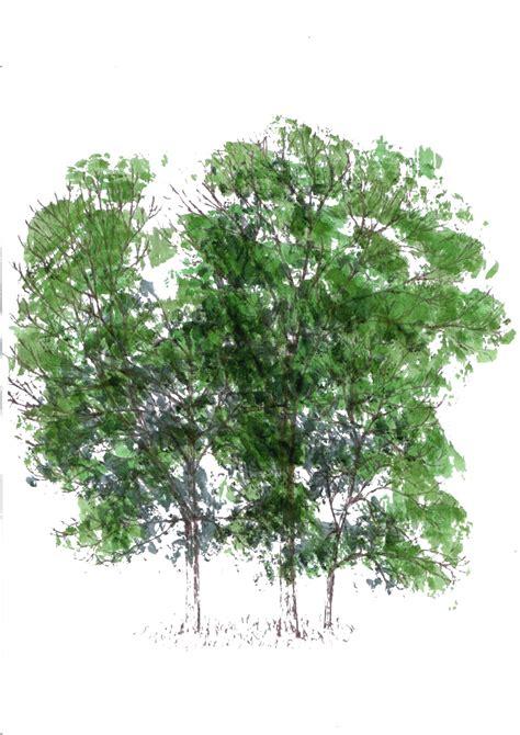 rendered trees paulswork blog