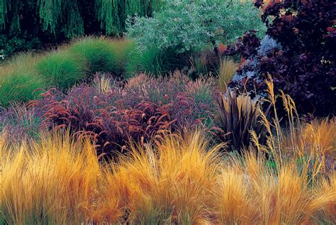 landscape designs with ornamental grasses pdf