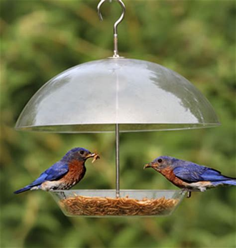 Bluebird Feeder Duncraft Dome Top Seed Bluebird Feeder