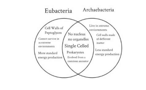 archaebacteria vs eubacteria venn diagram archaea vs bacteria venn diagram archaea is not bacteria