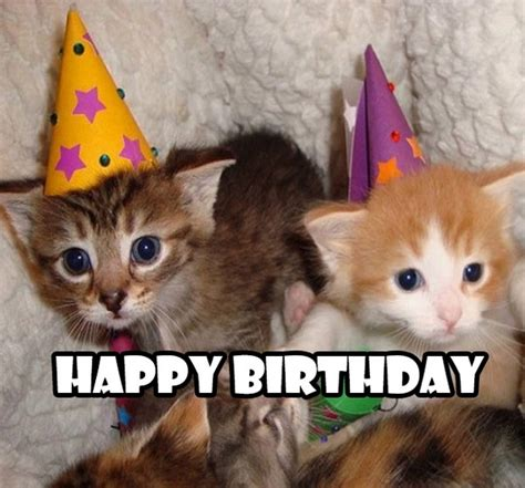 Cute Birthday Meme - image gallery happy birthday cute cats