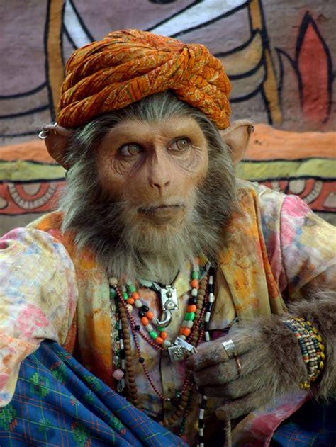 Hero4 Monkey studio indian rhesus monkeys