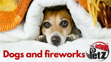 dogs and fireworks dogs and fireworks a practical guide to keep your safe petz