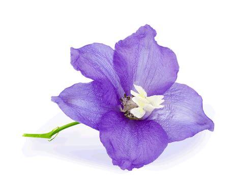 state flower of illinois prakruti nest