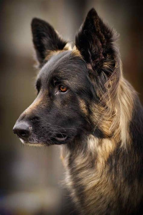 beautiful puppy dogs beautiful tails 2