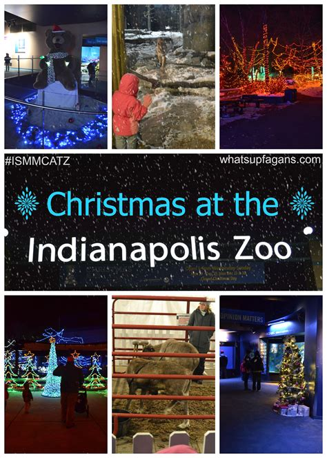 indianapolis zoo lights at the zoo issmcatz