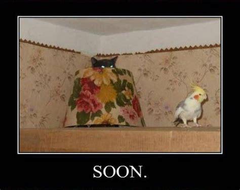 Cat Soon Meme - soon very soon 17 pics