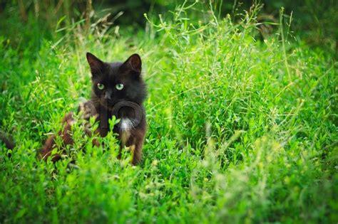 Caterpillar Ct11248 Free Box Yellow Black black cat on a green grass stock photo colourbox