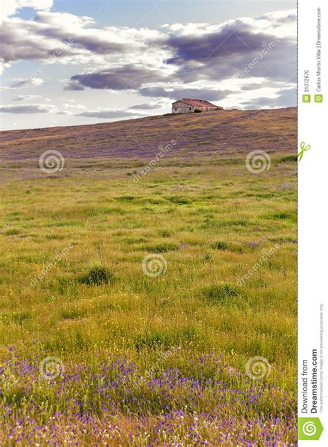 Cottage On A Hill by Cottage On The Hill Above A Blanket Of Flowers And Grass