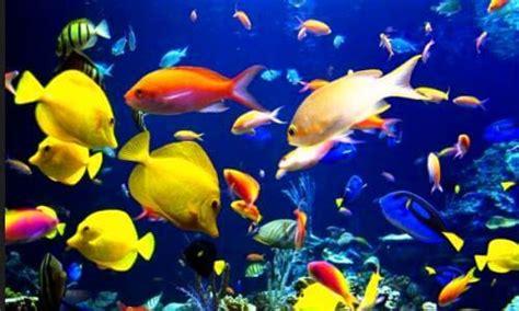 los peces de la c 243 mo respiran los peces bajo el agua 191 por d 243 nde lo hacen