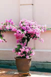 hardy outdoor potted plants potted plants patio plants