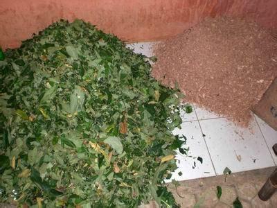 Pupuk Organik Kompos Dari Sah cara membuat pupuk kompos sederhana rumah dan kebun