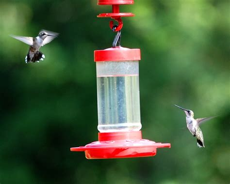question how many hummingbirds am i feeding
