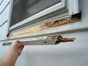 Timber Window Sill Replacement Window Repair Window And Window Sill On
