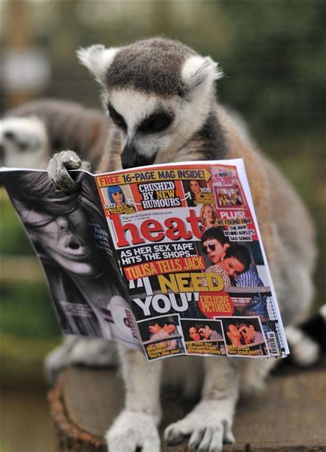 reading celebrity gossip magazines 25 best ideas about celebrity gossip magazines on