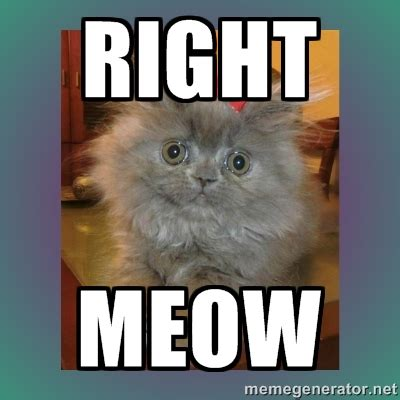 Meow Meme - business cat meme generator cat best of the best memes