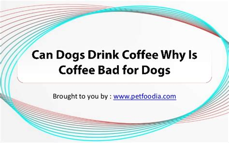 can dogs coffee can dogs drink coffee why is coffee bad for dogs