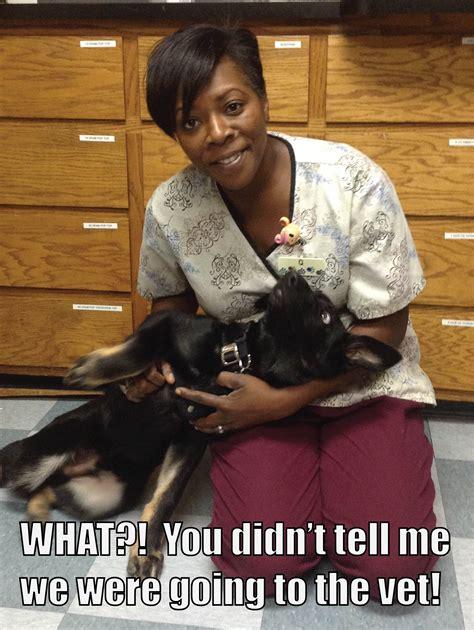 german shepherd memes german shepherd meme ccph cus commons pet hospital
