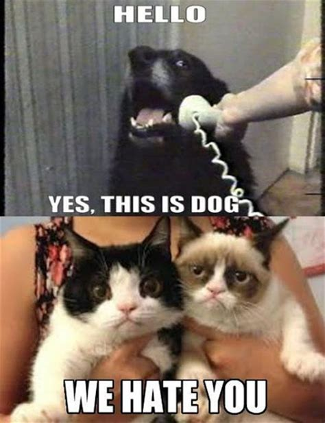 Cat And Dog Memes - grumpy cat and dog meme