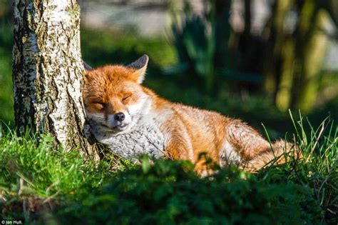 natures best uk wildlife centre photo contest highlights best of