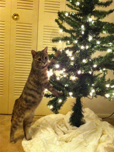 i have a cat need cat proof xmas tree how to make a cat proof tree with cats