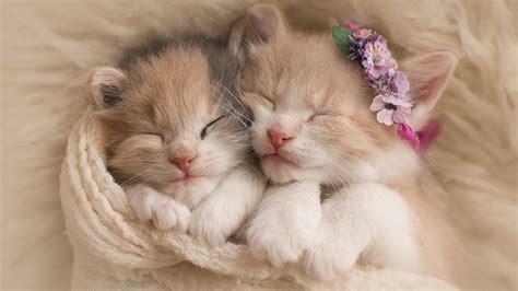 wallpaper cute cats kittens cute kittens adorable hd wallpaper wallpapersfans com