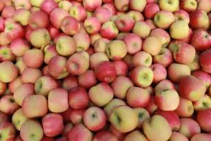 lots of apples ready for market abc news australian broadcasting corporation