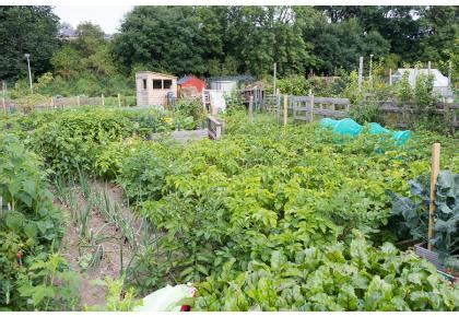 plymouth allotments garden and allotments for stonehouse creek bank the